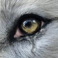 울프온라인 2(Wolf online 2) – 동영상