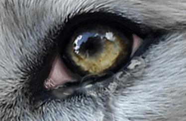 울프온라인 2(Wolf online 2) 공식 영상
